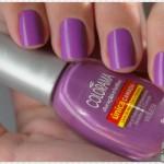 Violeta – Colorama